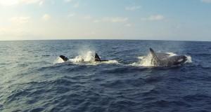Tofo-Orca1