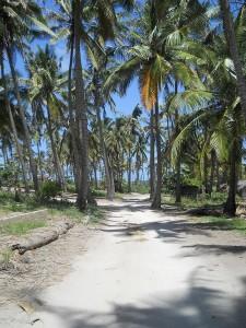 Tofo-Road